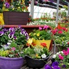 Up to 50% Off Flowers and Plants at Outback Greenhouse