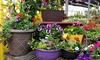Outback Greenhouse - Drenthe: Flowers and Plants at Outback Greenhouse (Up to 50% Off). Two Options Available.
