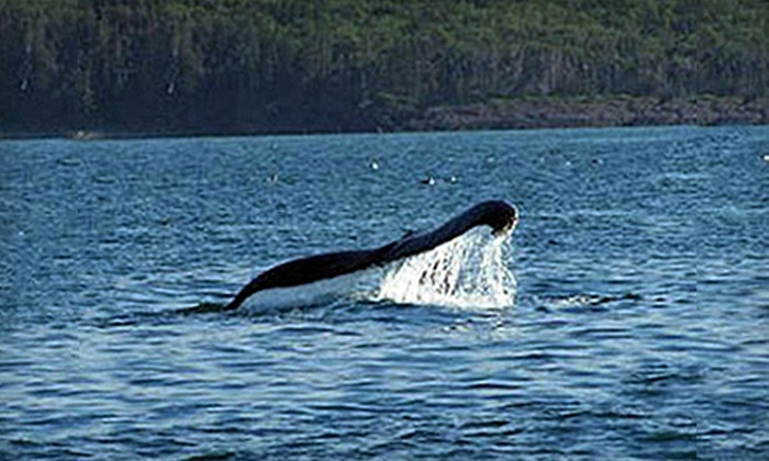 Dockside Whale Watching & Charters - Digby: Three-Hour Whale-Watching Cruise for an Individual or Family of Four from Dockside Whale Watching & Charters in Digby (Half Off)