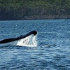 Half Off Whale-Watching Cruise in Digby