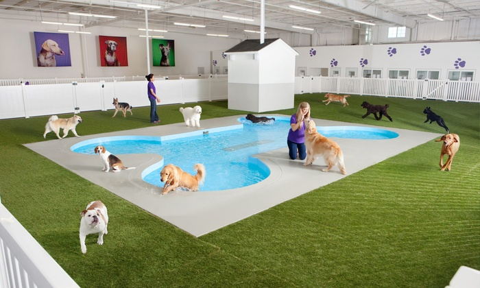 Paradise 4 Paws - Multiple Locations: Two, Four, or Seven Nights of Dog Boarding Plus 50% Off Airport Parking at Paradise 4 Paws (Up to 61% Off)