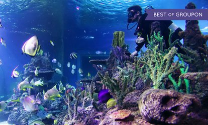 image for Diving with Sharks Experience at Skegness Aquarium (27% Off)