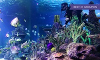 Diving with Sharks Experience at Skegness Aquarium (27% Off)
