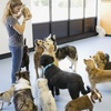 Up to 56% Off Daycare or Boarding at Paws A While