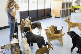 Paws A While: Up to 56% Off Daycare or Boarding at Paws A While