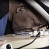 Buddy Guy — Up to 33% Off Blues Concert