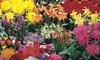 Sammlung von Sommerblüher (Munchen)