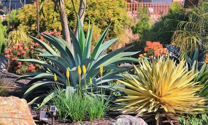 Yucca bright star planten groupon goods for Yucca exterieur gele