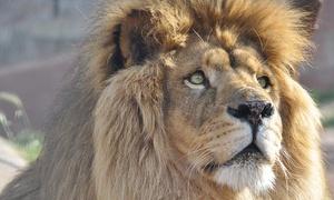 Parc Zoologique de Frejus: 1 entrée pour enfant, adolescent ou adulte pour le Parc Zoologique de Fréjus dès 9,90 €