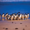 Phillip Island: Day Tour