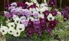 10 Garden-Ready Autumn Plants