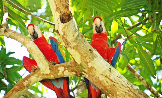 TripAlertz wants you to check out 8-Day Jewels of Costa Rica Tour for Two from Costa Rica Monkey Tours. Starting at $1,249 Total, $624.50 per Person. 8-Day Costa Rica Tour from Costa Rica Monkey Tours - Costa Rica Tour