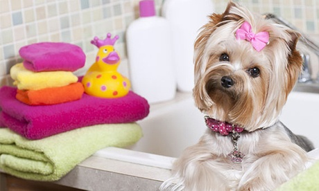 Spa Bath and Brush Package for Small, Medium, Large, or Extra Large Dog at Uptown Pet Salons (Up to 42% Off) 4e64151f-dd12-4eca-bb42-4b0b8faabef3