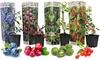 Set de 4 plantes à fruits