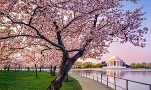 Up to 55% Off ''DC at Dusk'' Bus Tour from USA Guided Tours at USA Guided Tours, plus Up to 6.0% Cash Back from Ebates.