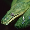 Repticon – Up to 50% Off Animal Expo