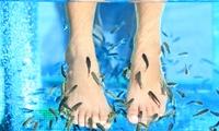 1x oder 2x 30 Min. Kangalfisch-Pediküre im Wonderfultime Kosmetik Institut (56% sparen*)