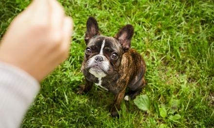 3 o 5 clases de adiestramiento canino con opción a domicilio desde 19,95 € con Marta Ayala