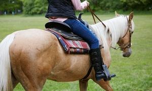 Cuadra Álvaro Gil: 4 u 8 clases de equitación a caballo o pony desde 39,90 € en Cuadra Álvaro Gil