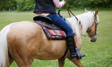 3 o 5 lezioni di equitazione in maneggio