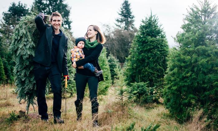 Weihnachtsbaum Selber Fällen.Weihnachtsbaum Selber Schlagen Stemper S Weihnachtsbäume Groupon