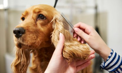 $28 for $50 Worth of Services — Natasha's Dog <strong>Grooming</strong> Spa