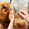 Up to 26% Off Pet Grooming at SOS Grooming