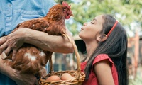 Summer Day Out for a Family of Up to Five at Red Mountain Open Farm