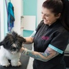 Up to 52% Off Dog Grooming at City Paws