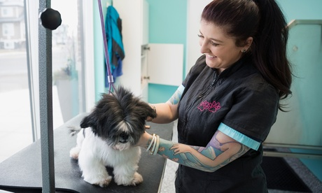 Sesión de peluquería con opción a pipeta anti parásitos para un perro de hasta 15 kg desde 14,90 € en Distrito Animal