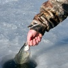 Up to 53% Off Ice-Fishing Trip