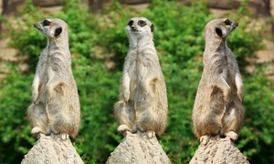 Secret Valley Wildlife Park: Secret Valley Wildlife Park for One Child and One Adult or Two Children and One Adult (Up to 36% Off)