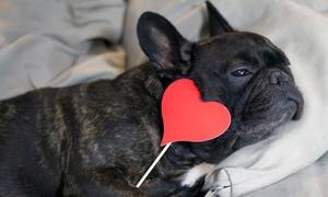 Nick dog style: Una toelettatura cani fino a 46 kg da Nick Dog Style, zona Affori (sconto fino a 54%)
