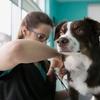 Dog Grooming £12