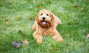 Go! Lizards Grooming: Two or Six Nights of Dog Boarding at Go! Lizards (Up to 43% Off). Four Options Available.