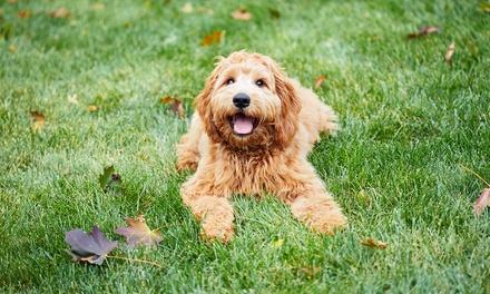 Revisión veterinaria con baño, arreglo y corte para perros pequeños (hasta 25 kg) desde 14,95 € en Jeremías