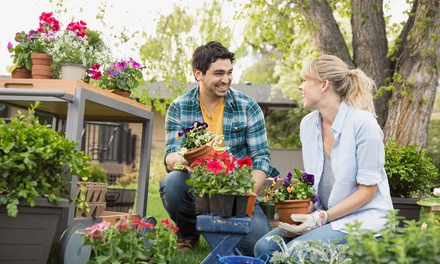 Curso online básico o avanzado de jardinería a elegir desde 16,95 € con Grupo Premium
