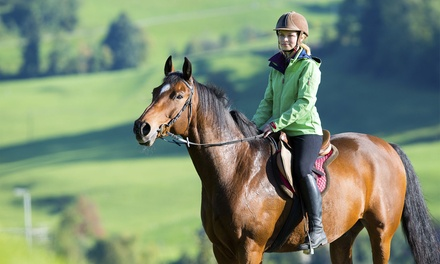 Mill Farm Riding School & Trekking Centre