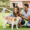 43% Off  Canine Rabies Package B at Pet Vaccination Services