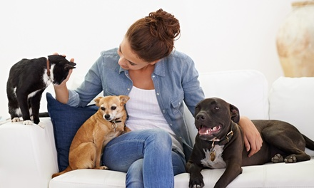 Level 2 Pet Nutrition, Psychology or Both Online Training from Online City Training (Up to 93% Off)