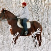 Up to 60% Off Winter Horseback Riding Camp