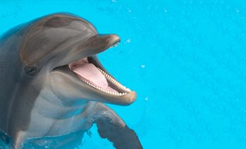 Up to 50% Off Experience from Dolphin Family Tours