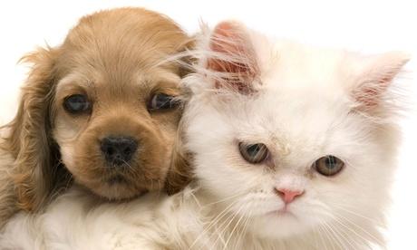 Vacunas para perros o gatos con revisión, higiene y asesoramiento dietético desde 16,90 € en Mesa y López