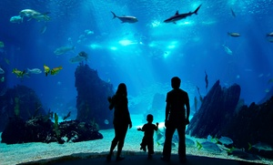 The Monalisa Yacht: Dubai Mall Underwater Zoo Entry with Optional Dhow Cruise or Glass Boat Cruise at The Monalisa Yacht