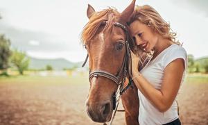 Cavallino Bianco Centro Ippico: 3 o 5 lezioni di equitazione individuali per principianti al Centro Ippico Cavallino Bianco (sconto fino a 76%)