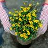 Up to 48% Off Plants and Garden Supplies at Schönheit Gardens