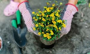 Online City Training: Garden Design and Maintenance Online Course at Online City Training (89% Off)