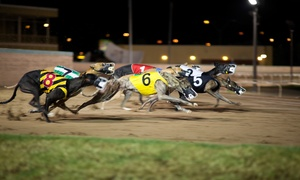 Henlow Racing Limited (GBGB): Dog Racing with Meal and Drink for Two, Four, or Six at Henlow Racing Limited (Up to 74% Off)