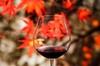 Up to 53% Off Niagara Wine Tour from Niagara Fun Tours