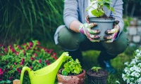 2 bis 5 Stunden professionelle Gartenarbeit inkl. Anfahrt und Material von Blumen & Garten (bis zu 60% sparen*)